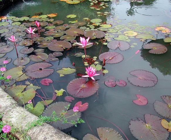 Votre bassin de jardin chez Jardiland à Nice