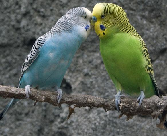 Les Oiseaux De Notre Oisellerie Jardiland A Nice